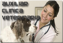curso auxiliar clinica veterinaria