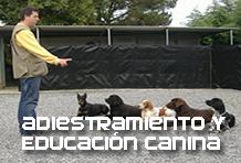 Asistencia a la atención clínica en centros veterinarios