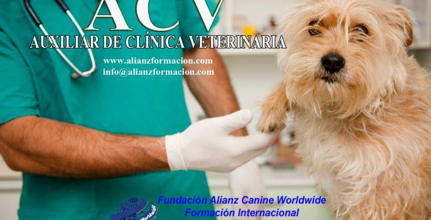Curso Auxiliar Clínica Veterinaria - Alianz Formación