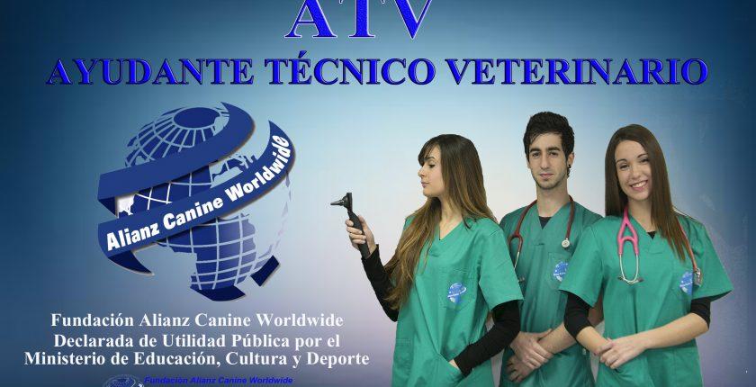 Te enseñamos a trabajar de Ayudante Técnico Veterinario? - Alianz ...